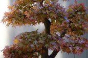 Фото 26 Карликовые деревья для дома: особенности ухода и 105+ уютных вариантов