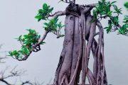 Фото 27 Карликовые деревья для дома: особенности ухода и 105+ уютных вариантов