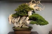 Фото 31 Карликовые деревья для дома: особенности ухода и 105+ уютных вариантов