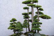 Фото 33 Карликовые деревья для дома: особенности ухода и 105+ уютных вариантов