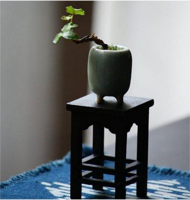 Миниатюрная версия дерева в крошечном горшочке