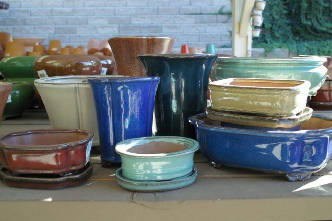 Цветные керамические горшочки для бонсай