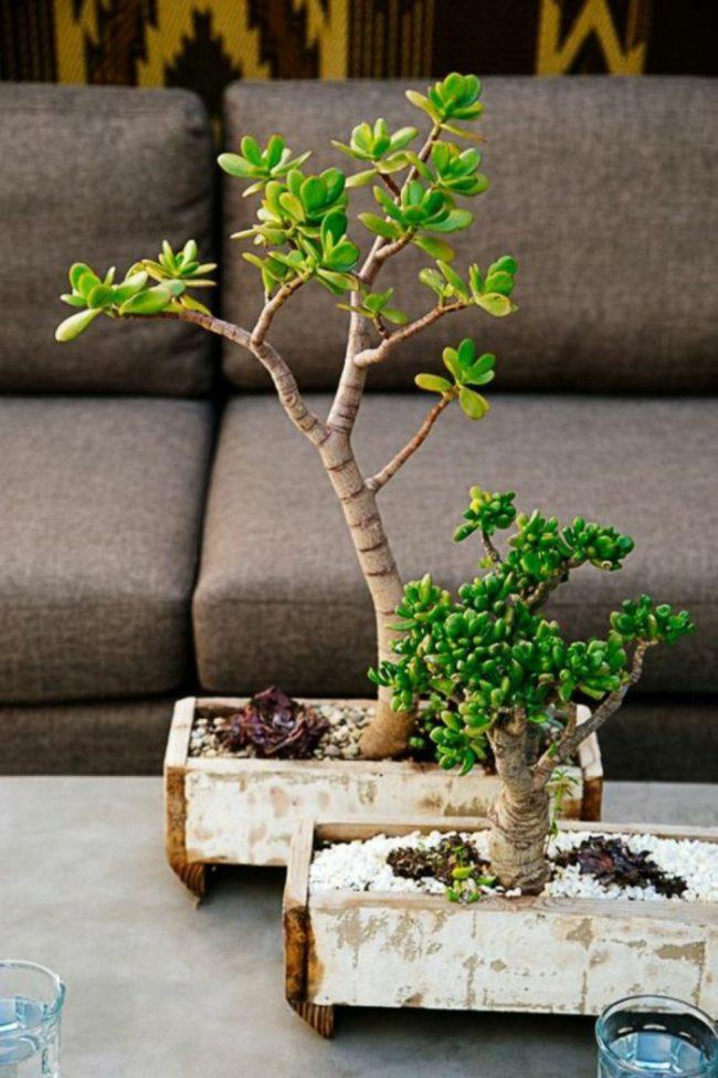 Самодельный деревянный горшок для бонсай