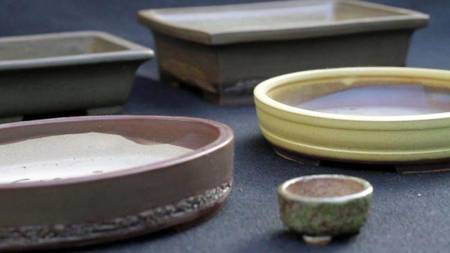 Скромные формы горшков в светлых тонах идеально подходят для бонсай