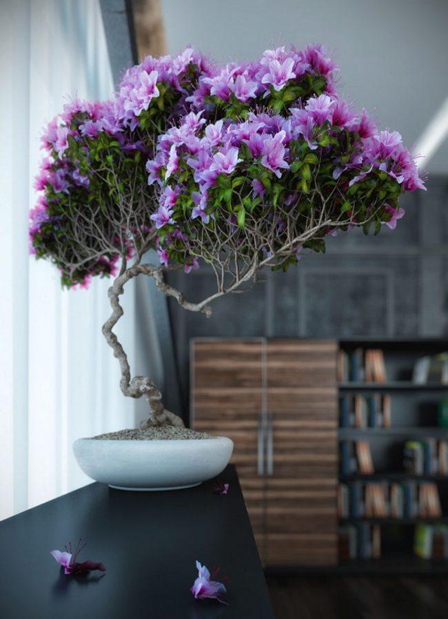 Домашнее цветущее дерево в светлом низком горшке
