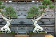 Фото 22 Горшок для бонсай: как сделать правильный выбор и 65+ оригинальных вариантов