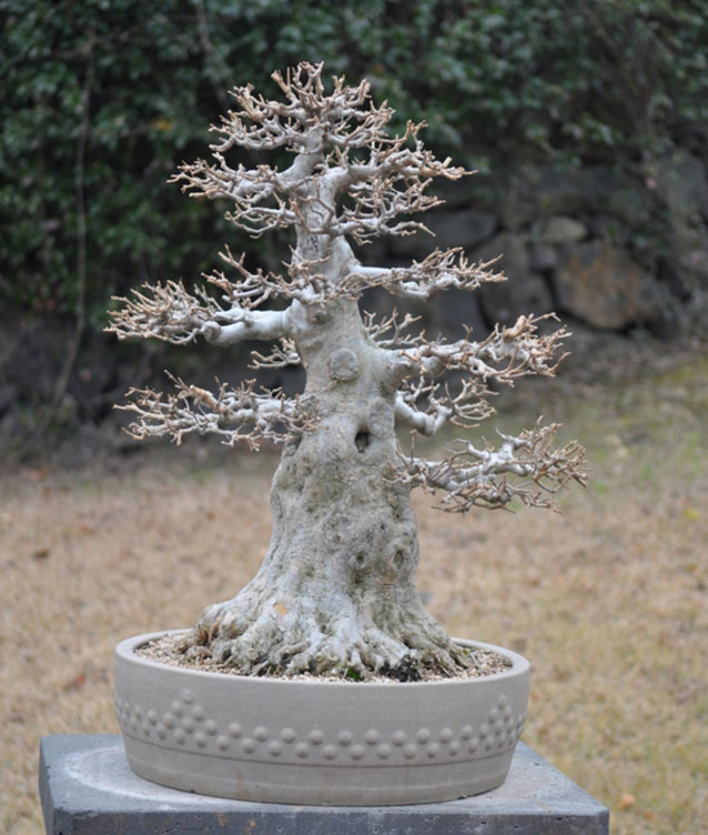 Каменная скульптура конусообразного дерева Чоккан в японском саду