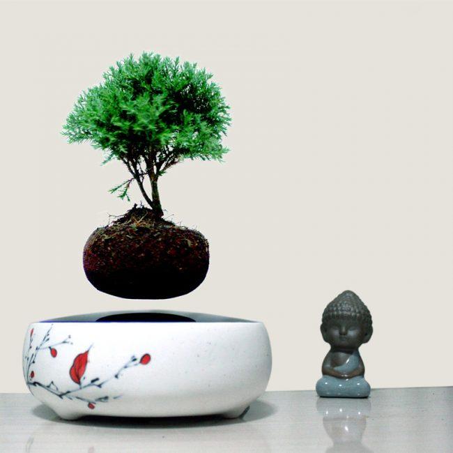 Легкий рисунок на цветочном горшке подчеркнет стиль растения
