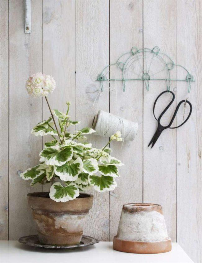 Домашние растения помогают очистить воздух в помещении