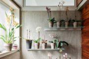 Фото 44 Стеклянные полки на стену: практичность, удобство и стиль для каждого