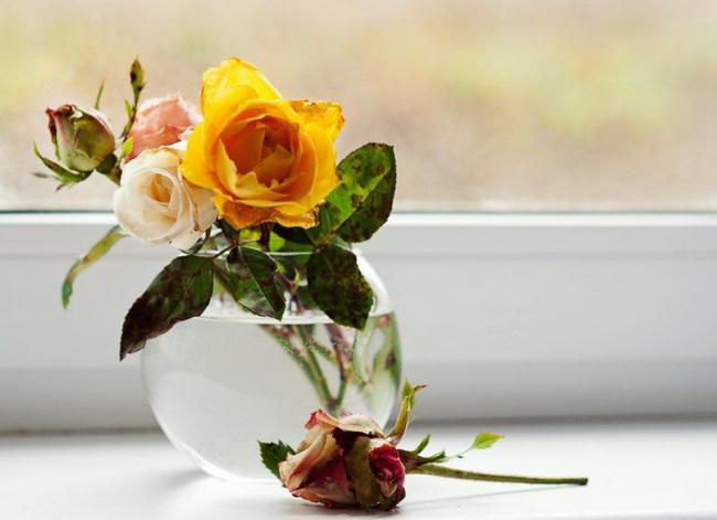 Прозрачная ваза из стекла для маленькой розы