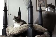 Фото 52 Делаем дом для кошки своими руками: выбор материалов и пошаговые мастер-классы