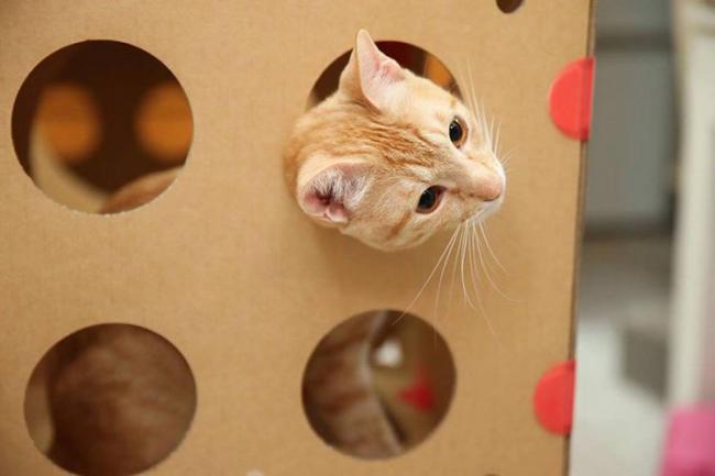 Декоративные отверстия понравятся даже кошкам