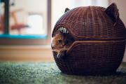 Фото 29 Делаем дом для кошки своими руками: выбор материалов и пошаговая инструкция