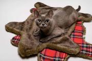 Фото 45 Делаем дом для кошки своими руками: выбор материалов и пошаговая инструкция