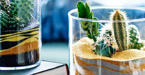 Флорариум своими руками: пошаговая инструкция по созданию мини-сада из суккулентов фото