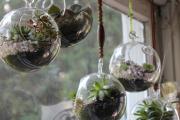 Фото 42 Флорариум своими руками: пошаговая инструкция по созданию мини-сада из суккулентов