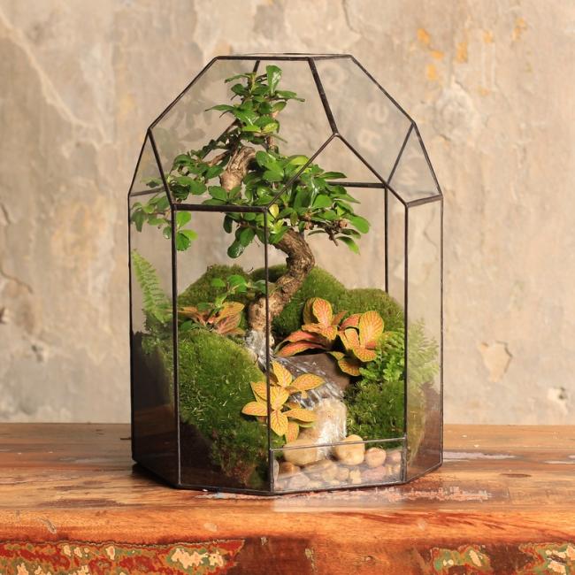 Очень лаконичное сочетание формы емкости флорариума с внутренней композицией бонсая в импровизированой горной месности