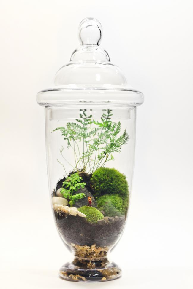 Небольшой флорариум своими руками с композицией горной местности