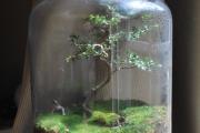 Фото 46 Флорариум своими руками: пошаговая инструкция по созданию мини-сада из суккулентов