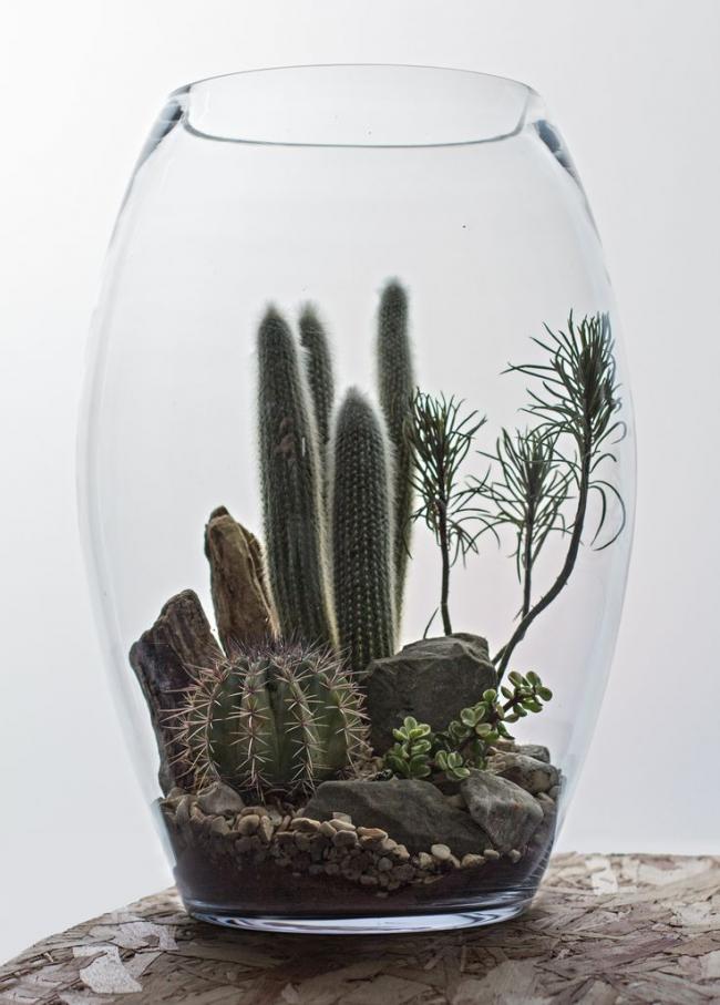 Атмосферная композиция пустыни в флорариуме своими руками