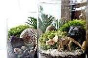 Фото 44 Флорариум своими руками: пошаговая инструкция по созданию мини-сада из суккулентов