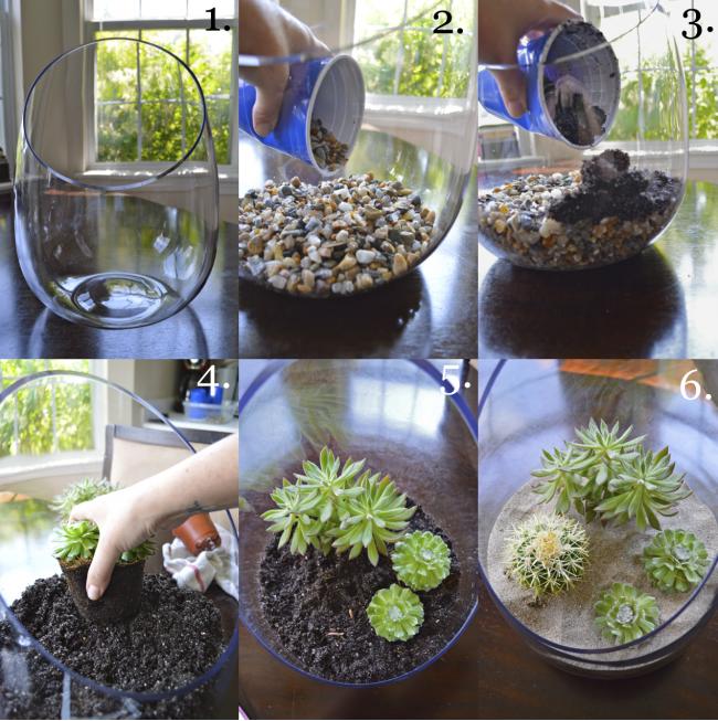 Флорариум своими руками: пошаговая инструкция
