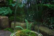Фото 47 Флорариум своими руками: пошаговая инструкция по созданию мини-сада из суккулентов