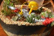 Фото 11 Флорариум своими руками: пошаговая инструкция по созданию мини-сада из суккулентов