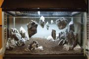 Фото 12 Флорариум своими руками: пошаговая инструкция по созданию мини-сада из суккулентов