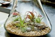 Фото 13 Флорариум своими руками: пошаговая инструкция по созданию мини-сада из суккулентов