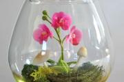 Фото 15 Флорариум своими руками: пошаговая инструкция по созданию мини-сада из суккулентов