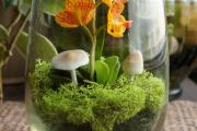 Фото 16 Флорариум своими руками: пошаговая инструкция по созданию мини-сада из суккулентов