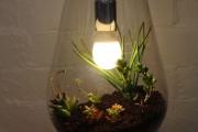 Фото 17 Флорариум своими руками: пошаговая инструкция по созданию мини-сада из суккулентов