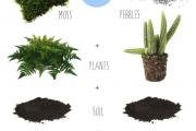 Фото 19 Флорариум своими руками: пошаговая инструкция по созданию мини-сада из суккулентов