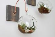 Фото 20 Флорариум своими руками: пошаговая инструкция по созданию мини-сада из суккулентов