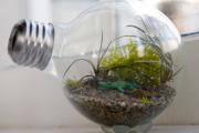 Фото 3 Флорариум своими руками: пошаговая инструкция по созданию мини-сада из суккулентов