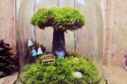 Фото 24 Флорариум своими руками: пошаговая инструкция по созданию мини-сада из суккулентов