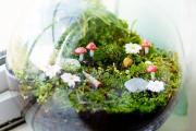 Фото 32 Флорариум своими руками: пошаговая инструкция по созданию мини-сада из суккулентов
