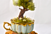 Фото 35 Флорариум своими руками: пошаговая инструкция по созданию мини-сада из суккулентов