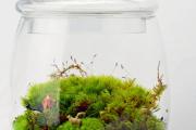 Фото 38 Флорариум своими руками: пошаговая инструкция по созданию мини-сада из суккулентов