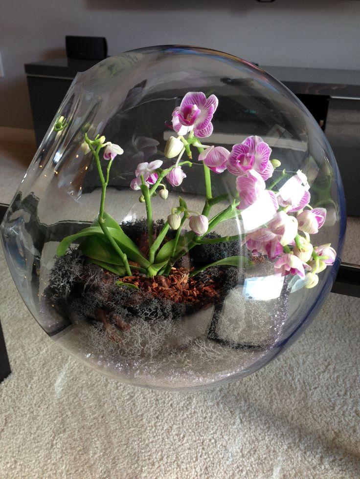 Как сделать флорариум для орхидей своими руками 58