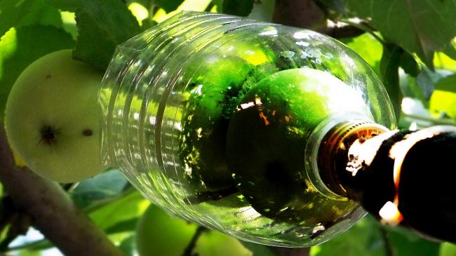 Остроумное приспособление для сбора плодов с деревьев