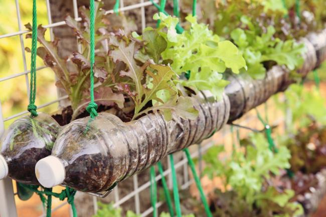 Пластиковые бутылки давно уже стали очень востребованы у садоводов