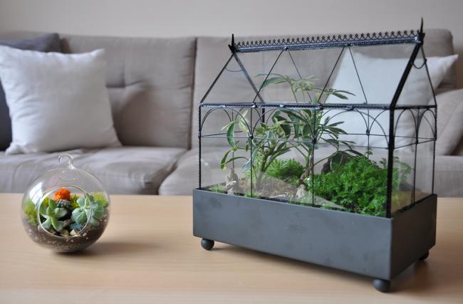 Как сделать террариум для растений