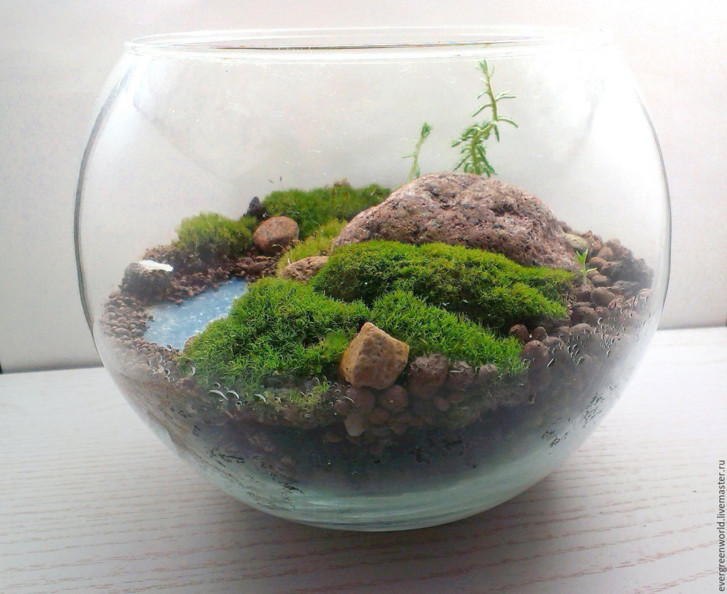 Флорариум для растений своими руками фото 6