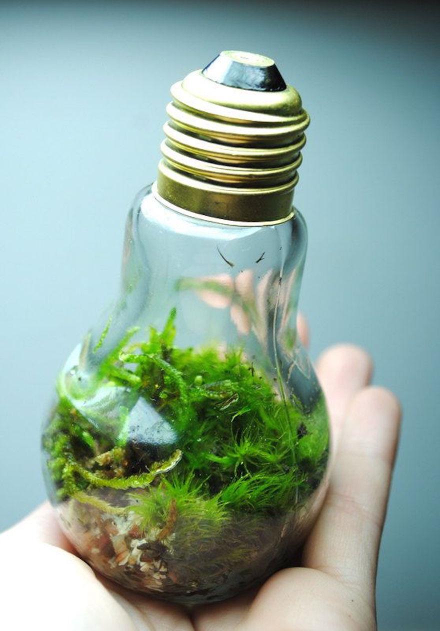 Сад в бутылке сделать своими руками