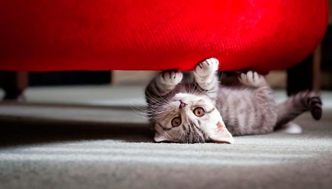 Эластичные натяжные чехлы из плотной ткани никакого интереса для кошек не представляют