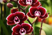 Фото 10 Венерин башмачок: особенности выращивания, правильного полива и пересадки
