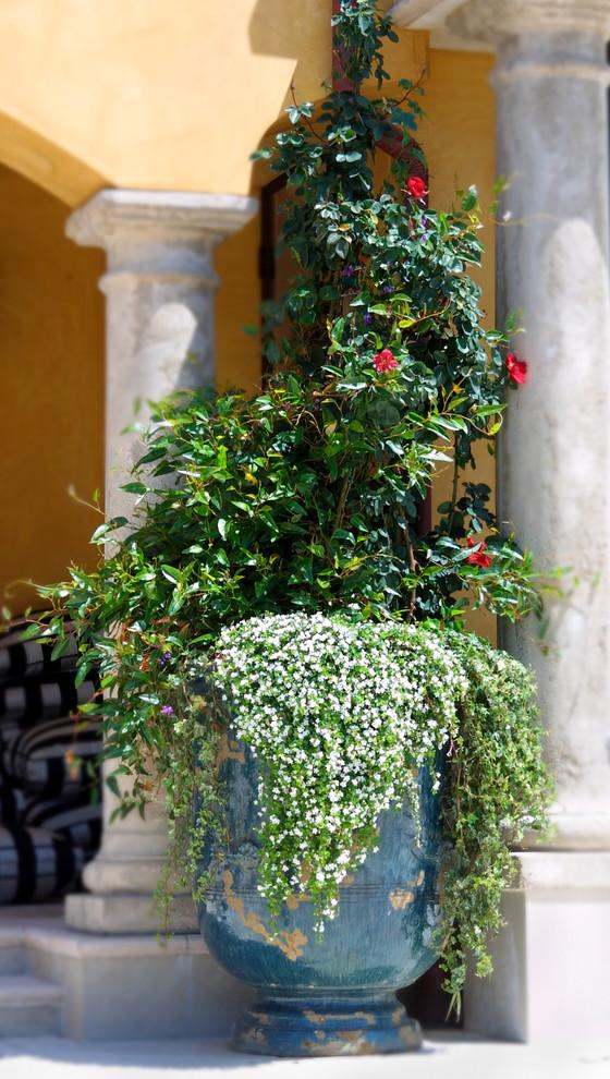 Бакопа в больших декоративных вазах на улице добавляет нотки французского шарма